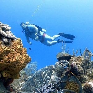 Guided Shore Dive (1 Tank)