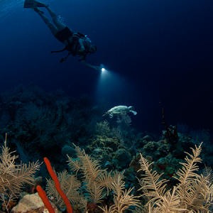 Night Dive (1 Tank)